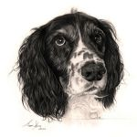 Commission - 'Ollie' the Springer Spaniel by Captured-In-Pencil