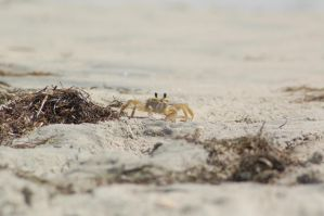 Crab by Green-Ocean-Stock