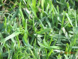 some grass by jimmyj332