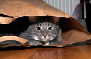 Cat In The Bag by PenguinPhotography