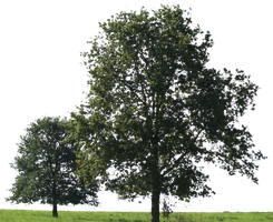 tree 18 png by gd08