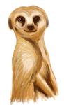 Tablet Test - Meerkat by Van-der-Guard