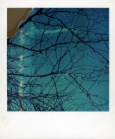Polaroid Tree by lloydhughes