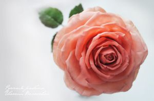 My handmade polymer clay rose. by V-eva