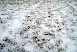 snow-covered grass 01 by barefootliam-stock