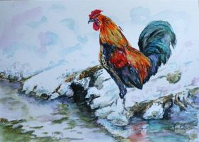 rooster and winter by danuta50