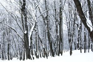 stock: winter forest 6(credit and show the result) by amka-stock