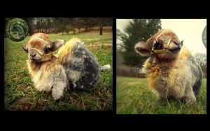 SOLD- HAND MADE Poseable Baby Camel! by Wood-Splitter-Lee