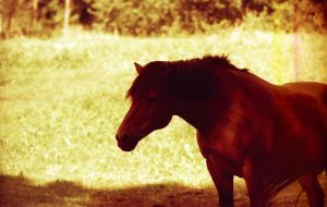 Redscale Haze:Matter of Horses by Helkathon