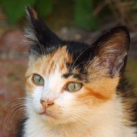 Kitten face II by Jorapache