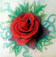 colur pencil rose by 76Bev