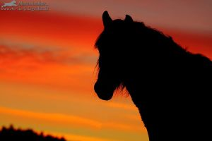 when the sky is burning I by Maaira