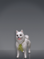 Samoyed by deexie
