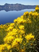 Crater Lake in Yellow and Blue by kelida