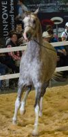 STOCK - 2014 Total Equine Expo-93 by fillyrox