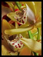 Orchid III by sags