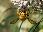 Just Bee by DaisyDinkle