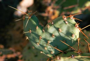 Cactus Love by setinet83