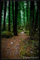 A Walk In The Woods by RSphotoArt