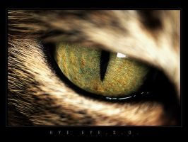 HYE EYE.S.O. by SteveCampbell