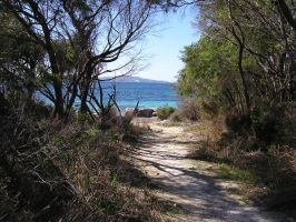 Whalers Cove Path by stock-kitty