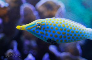 Yellow Spots by SaraJArts