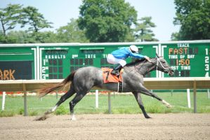Racehorse Stock 70 by Vance-Equine-Stock