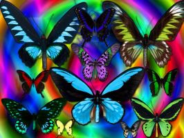 Butterflys by Sixx666