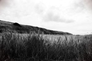 Holywell Grass by WillJH