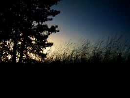 Silhouettes at Dusk by paploothelearned