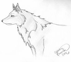 Wolf by Boomboom34