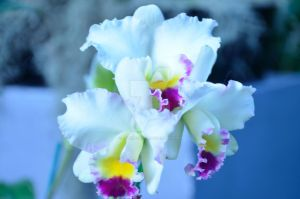 CBG 2012 Orchid Show 7 by AmberPalette