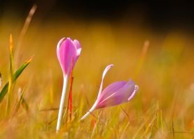 Life of flowers by lica20