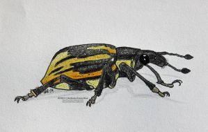 Diaprepes Root Weevil by Cassy-Blue