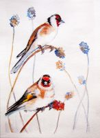 two the goldfinch by Elena-nenz