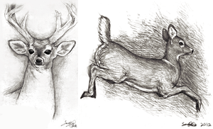 Deer Sketches I by dwightyoakamfan