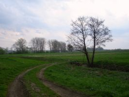 the road by layenne