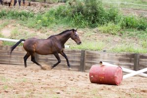 Km Old TB canter side view by Chunga-Stock