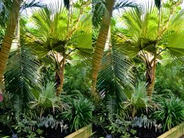 Stereoscopic Kew Palm House Paper Cutout Fans by aegiandyad