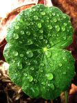 Leafy Droplets Stock by richardxthripp