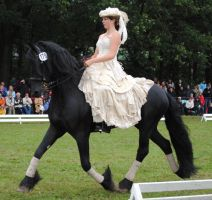 Ladies On Friesians 21 by ponystock