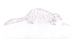 Ground Pangolin by gir-is-me