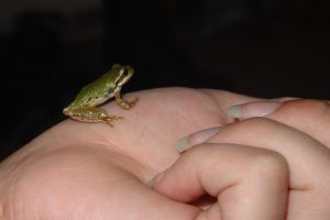 Frog1 by Tortured-Raven-Stock