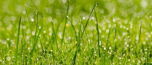 Wet Grass UWHD 21:9 2560x1080 Wallpaper by aradilon