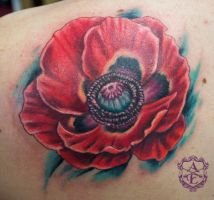 Poppy Tattoo done by Sean Ambrose by seanspoison