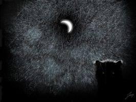 .. weird cat in the moonlight by wildtoele