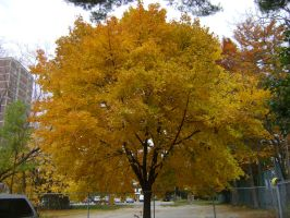 Canadian Fall Colours 32 by Aswang301