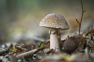 mushroom in the forest by SvitakovaEva