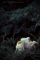 Skull n bush by KatrineH