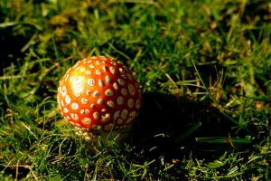 Red Toadstool by zpyder